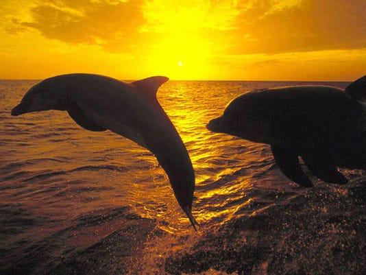 -dolphinfromboat.jpg_20120615.jpg