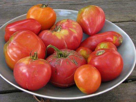 IMG_tomatoes_1_1_K3BDL3NG.jpg_20150722.jpg