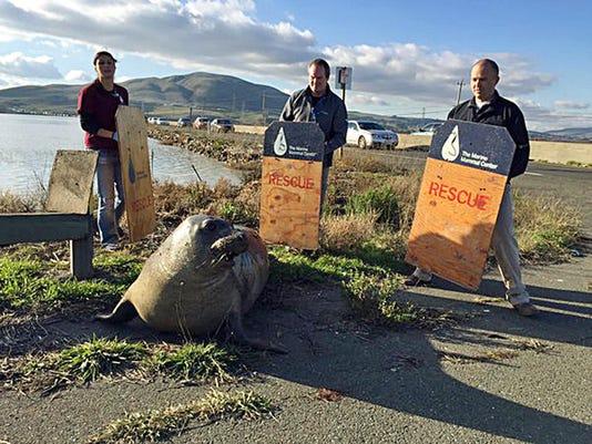 Seal Stops Traffic