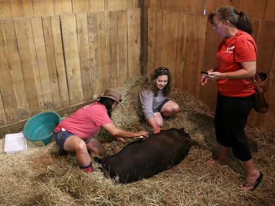 Sarah Kidd, right, looks on as Catherine Clark, middle, pets and Lori Collins, left, brushes Chatter the pig at Redemption Road Rescue on Saturday. Collins is the founder and director of Redemption Road.