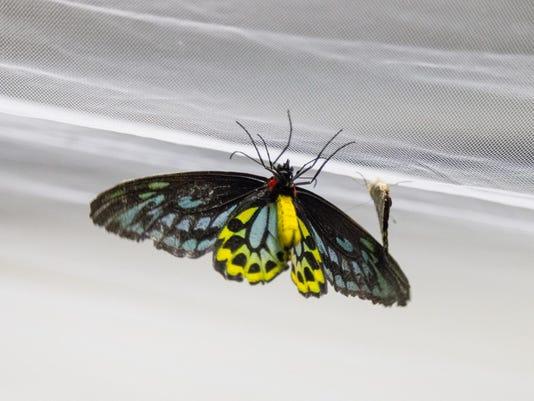 20151017_Insectapalooza