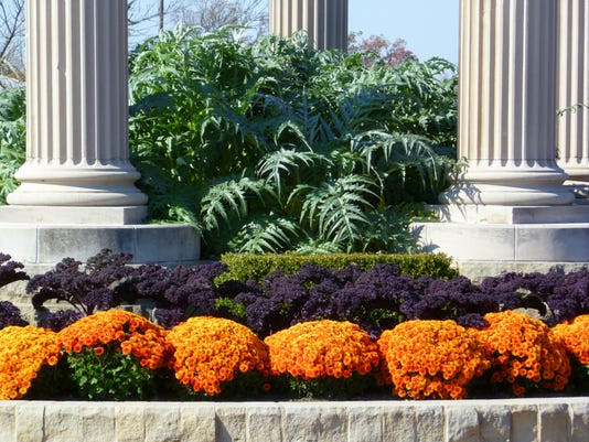 From front to back. Mums, kale, and cardoon. (2000x1500).jpg