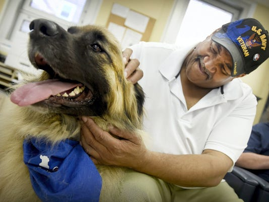 Earl McPhearson of Lebanon pets Brooklyn, a trained therapy animal — and a massive example of the Leonsberger dog breed owned by an Elizabethtown couple. Caring Hearts, an animal therapy group that visits people in hospitals and nursing homes, visited the Lebanon VA Medical Center earlier this week.