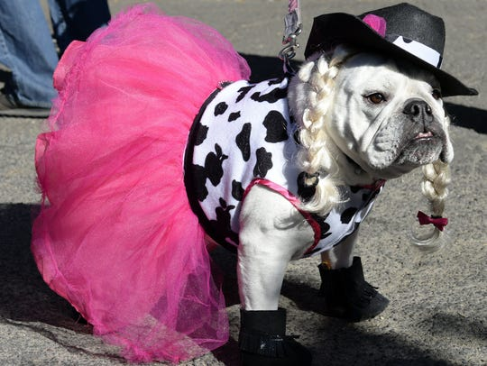 Dress up yourself and your pooch and try to win a prize at the Halloween 5K Fun Run on Sunday.
