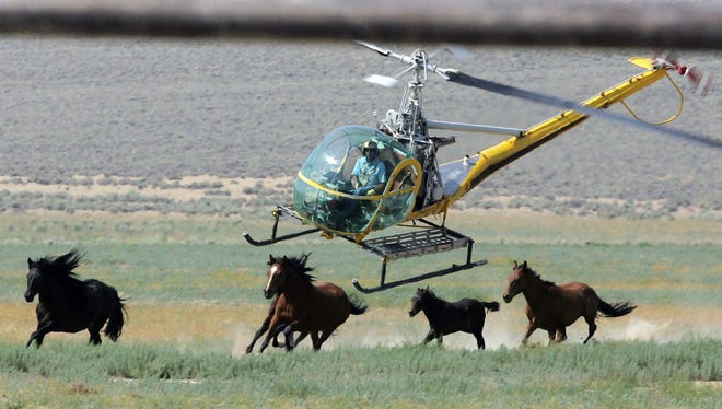 In this July 13, 2008 file photo a livestock helicopter pilot rounds up wild horses from the Fox & Lake Herd Management Area from the range in Washoe County, Nev.