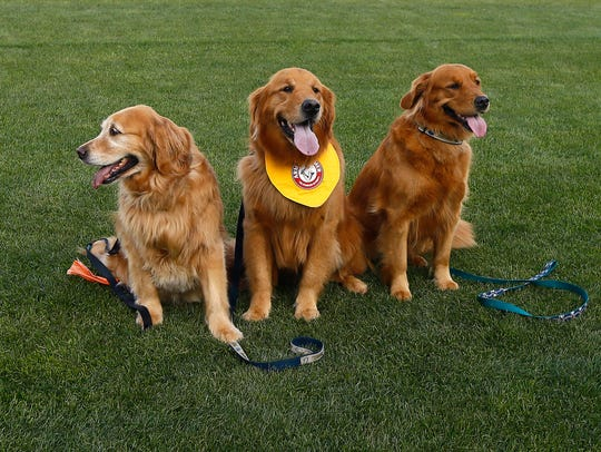 Reba, l, mother of Trenton Thunder's  bat dog Rookie