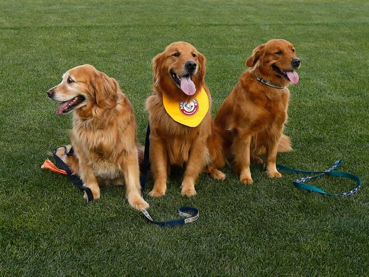 Reba, l, mother of Trenton Thunder's  bat dog Rookie and his sister Mickie at a tribute to the three generations of bat dogs at ARM & HAMMER Park. The Double-A affiliate of the Yankees have had a bat dog since 2002, Rookie keeping it in the family, taking after his grandfather, the Thunders original bat dog, Chase and his late father, Derby. July 2, 2018. Trenton, NJ