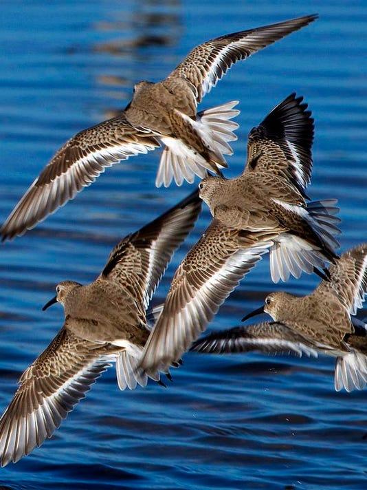 Bird Count Group.jpg