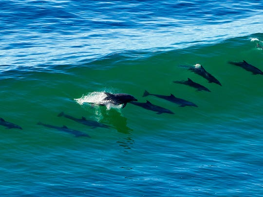San Diego is a biodiversity hotspot.