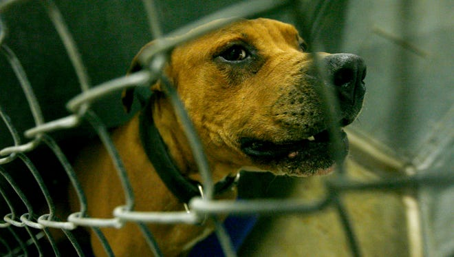 Ten dogs, including seven pit bull terriers, were seized.