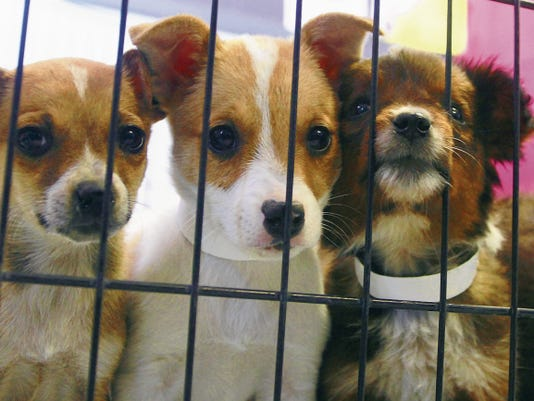 Headlight File Photo   Curious puppies watch as staff moves about at the Deming Animal Shelter, 2135 Onate in the city's industrial park. The Shelter can be reached at 575-546-2024.