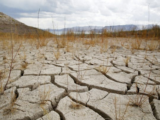 Plants grow out of dry cracked ground that was once underwater near Boulder Beach in the Lake Mead National Recreation Area near Boulder City, Nevada in this file photo from 2015.