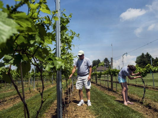 Father-daughter team Jeff and Alex Gormley check some of the vineyard plants while giving a tour of the grounds at Thunder Ridge Vineyards on May 18.