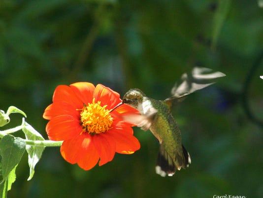 hummingbird 2013 A Name