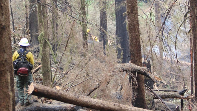 A firefighter stands on a log and watches smoke rise in the distance from a recently felled tree.
