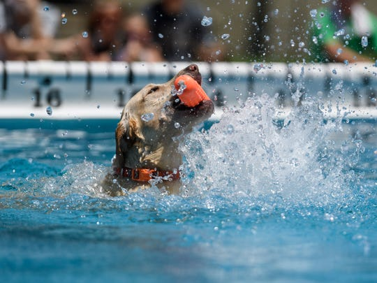 Miss Molly, a two-year-old yellow lab from Newburgh, swims back to the dock after competing the Ultimate Air Dogs show during ShrinersFest in downtown Evansville, Ind., Saturday afternoon, June 30, 2018. Cindi Walczak, Miss Molly's owner, travels around the country with Miss Molly to compete in dog dock jumping shows.