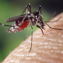 Wisconsin confirms first human West Nile cases of the year