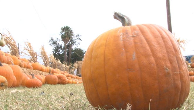 Wade Kelsall, the owner of Mother Nature's Farm in Gilbert, said most of the pumpkin patches and a lot of the stores in Arizona buy locally.