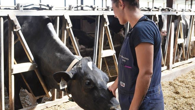 Abby Driscoll pets her cow, Amy, who won an honorable mention at the Manitowoc County Fair a few weeks ago.