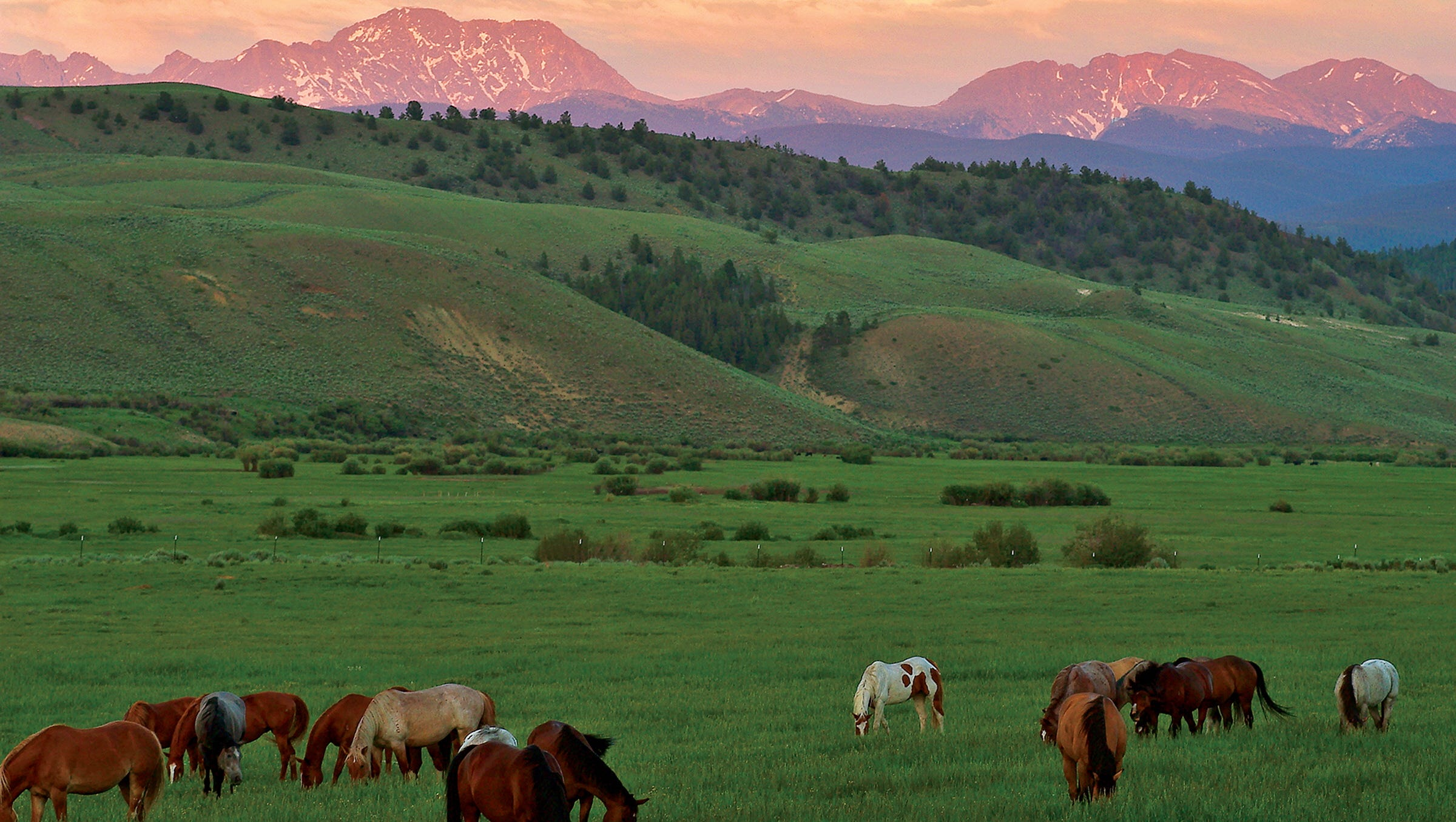 Old-fashioned dude ranches are attracting a new breed of city slickers looking to unplug from modern life, says Gavin Ehringer, author of '100 Best Guest Ranch Vacations in North America.' But now they've expanded their offerings. Pictured, C Lazy U Ranch, in Granby, Colo.