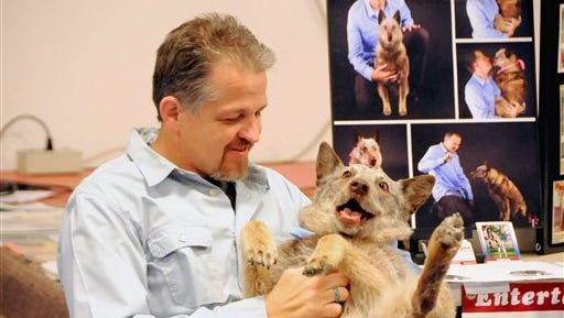 In a Nov. 11, 2014 photo, Eric Melvin scratches the belly of his dog, Angelyne the Amazing DEAF Cattle Dog at Riverview Christian School east of Fort Morgan, Colo. Greeley didn't expect that taking Angelyne, to the Paws on the Promenade in 2007 would launch a career, a passion and worldwide recognition. On May 28, 2016, Melvin will be retiring the performance part of his work with Angelyne, a 10-year-old Australian cattle dog, but will continue the bookings he has scheduled through the year. His focus will be on inspiring, educating and raising awareness about the deaf dog community. (Zachary Laux/Fort Morgan Times via AP)