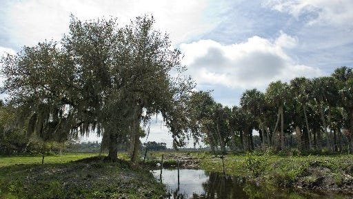 The Adams Ranch property in St. Lucie County is seen in this 2014 file photo. It is one of the two Treasure Coast sites on the state's land protection wishlist.