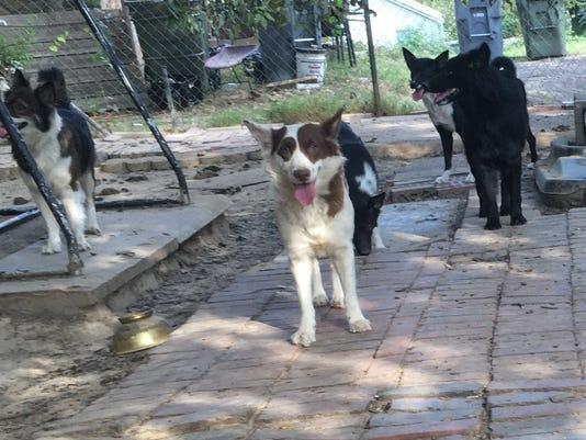 636429863658733994-Animal-shelter.jpg