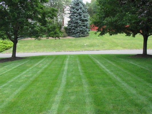 Daily Record Organic Lawn Care Lawn