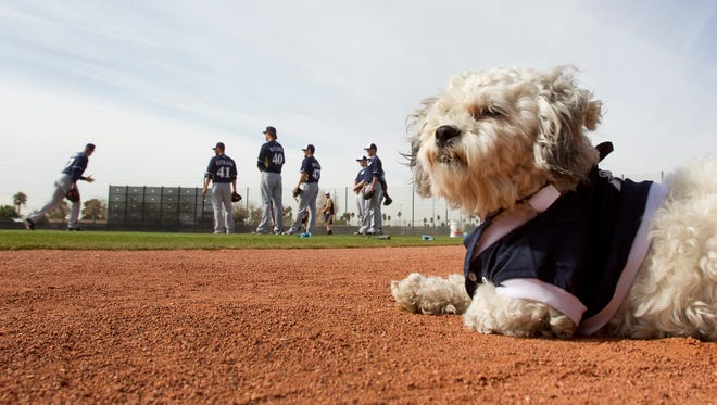 Hank surveys the spring-training action last February at Maryvale Baseball Park. He'll return to meet fans on Saturday, March 28.