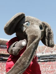 Big Al is the costumed elephant mascot of the University