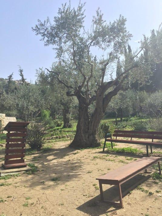 Garden of Gesthemane.jpg