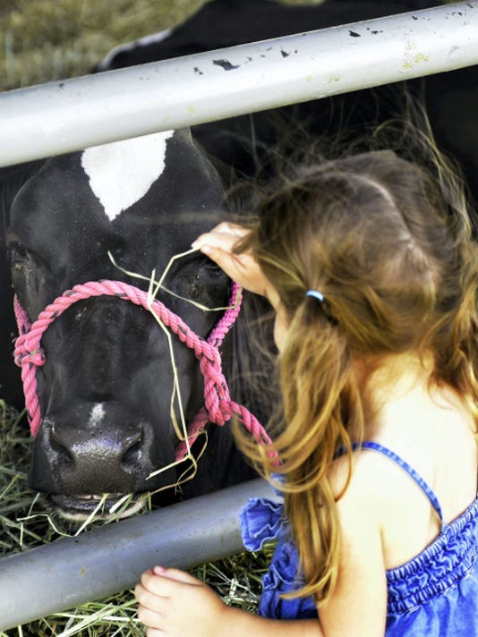 Amelia Hillwig, 3, Chambersburg, greets a new friend at a barn Wednesday, July 22, 2015 at Shippensburg Community Fair. (Markell DeLoatch - Public Opinion)