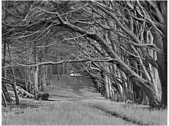 """Fred Dusel, """"Pathway Moss Beach,"""" carbon photographic"""