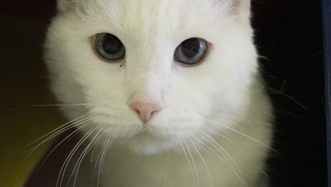 Sasha's waiting at the Oshkosh Area Humane Society for a forever home.