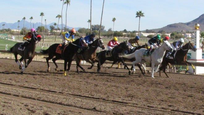 Horses racing on Turf Paradise track.