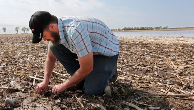 """Farmer Greg Swank digs in the soil to check the condition of soybean seeds Monday, May 8, 2017, in a field off County Road 800 South. Swank planted soybeans in the field April 27. """"They're sprouting, they're not dead,"""" said Swank. A portion of the field will have to be replanted as the seeds were lost due to standing water (background) or soil that is saturated with water. """"You gotta come out and see if it's (the planted seeds) doing what it needs to,"""" Swank added."""