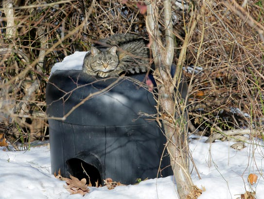 A member of the cat colony rests on a makeshift shelter behind Sara Silverstein's townhouse.