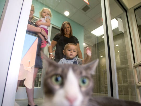 Anna Doollin, her daughter Mya Doollin, Mandy Campbell and her son Easton Campbell look at cats as they play in a pen, Monday, July 17, 2017 at the Farmington Animal Shelter.