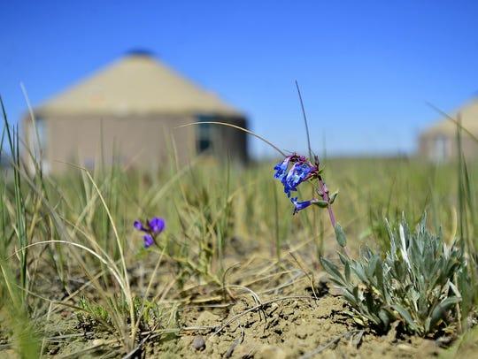 Kestrel Camp, the American Prairie Reserve's yurt camp,