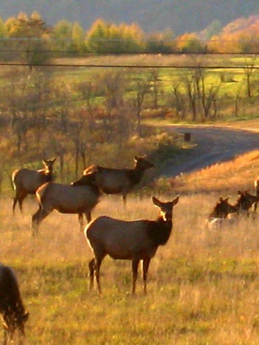 STG1024 dvt elk poaching .jpg