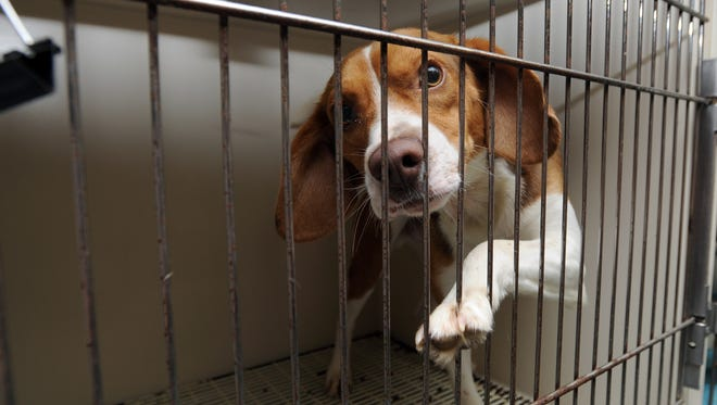 Old fiberglass kennels in the puppy room have rusted and bent bars, as well as holes in the fiberglass where dogs have chewed through them. A donor has pledged to match donations through August toward the purchase of kennels.