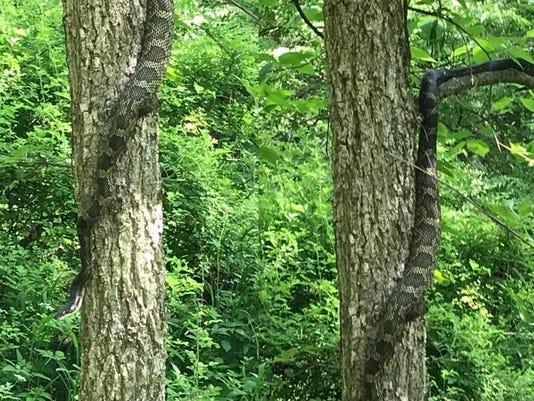 636619808593638508-snakes.jpg