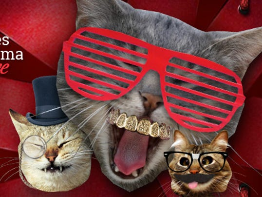 Legacy's Christmas Cats TV
