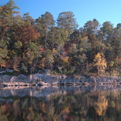 Rock Bluff at Torreya State Park, photo credit Harley Means