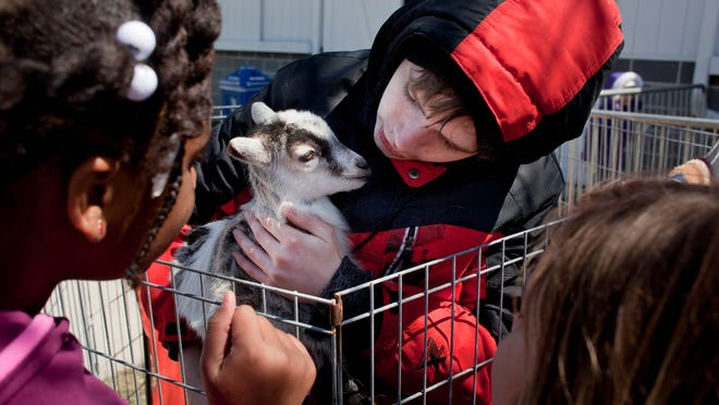 Bailey Adams, 13, of Jeddo, holds a young Nigerian Pygmy goat during Earth Fair Friday at Goodells County Park.