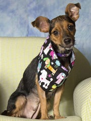 Laney is available for adoption at Friends for Life,952