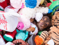 FREE Mask Toy from BarkShop for your Pup!
