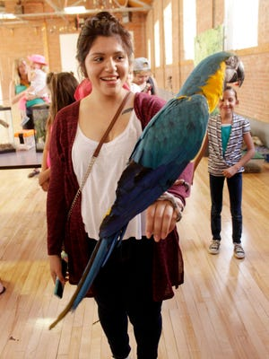 AsiaMarie Garcia holds a parrot at the reptile show on Thursday hosted by the WNMU Art Club.