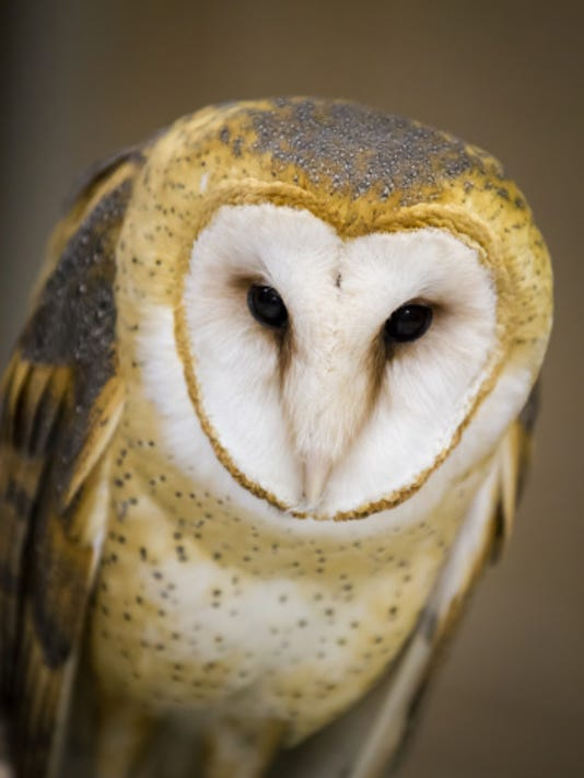 MNCO 0724 Dick Martin's Outdoor Notes on Barn Owls.jpg