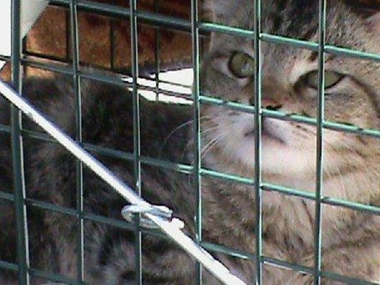 635531202248549993-GWM-Cat-in-cage
